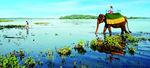 Шри Ланка - ОСТРОВЪТ КАТО СЪЛЗА, БОГАТ НА ДИВА ПРИРОДА И ОСТАНКИ ОТ РАННИ ЦИВИЛИЗАЦИИ